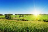 Soluppgång över fältet majs — Stockfoto