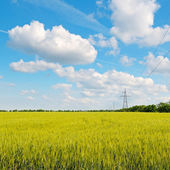 Wheat field, blue sky and power lines — Stock Photo