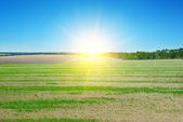 Field, sunrise and blue sky — Stock Photo