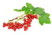 Red currant isolated on white background — Stock Photo