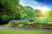 Sunrise in beautiful summer park — Stock Photo