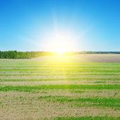 Pole, slunce a modrá obloha — Stock fotografie