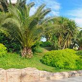 Tropical palm trees — Foto de Stock