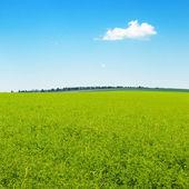 Malownicze zielone pole i błękitne niebo — Zdjęcie stockowe