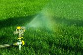 Summertime Sprinkler — Stock Photo