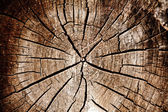 Log close up — Stock Photo