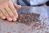 Cocoa nibs — Stock Photo