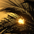 Stock Photo: Orange sunset through palms