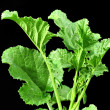 Mustard leaves — Stockfoto