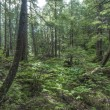Southeast Alaska forest — Stock Photo