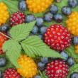 Stock Photo: Wild Alaskberries