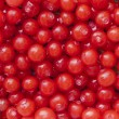 Red huckleberries — Stock Photo