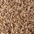 Sprouted wheat berries — Stock Photo #36903509