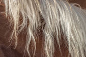 Blonde horse mane — Stock Photo