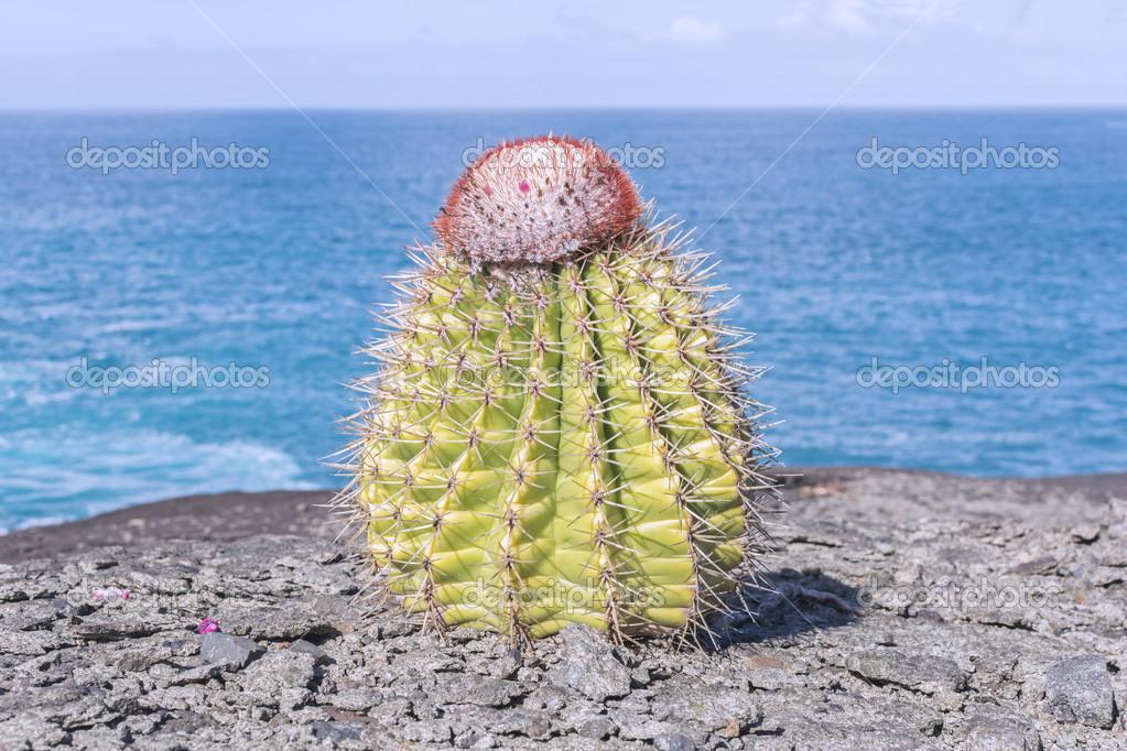 """Képtalálat a következőre: """"karibi kaktuszok"""""""
