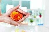 Cherish rose — Stock Photo