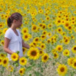Sunflower walk - Stock Photo
