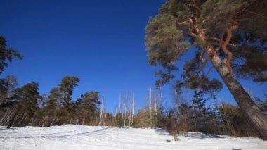 W zimowym lesie — Wideo stockowe