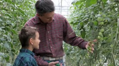 Tomato growers — Stock Video