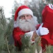 Santa in forest — Stock Video #18261879