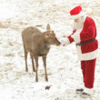 Santa feeding deer — Stock Video #18276809