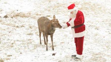 Santa feeding deer — Stock Video