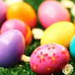 Decorative eggs — Stock Photo