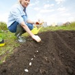 Stock Photo: Sowing seed