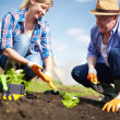 Farmers working — Stock Photo #28278151