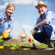 Stock Photo: Farmers in the garden