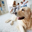 Cute dog — Stock Photo #32902309