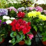 Floral diversity — Stock Photo