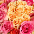 Fresh roses — Stock Photo #38918305