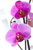 Beautiful orchids — Stock Photo