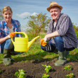 Farmers working in the garden — Stock Photo