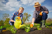 Farmers watering plants — Stock Photo