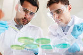 Clinicians analyzing liquids — Stock Photo