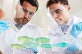 Clinicians analyzing liquids — Fotografia Stock