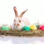 Easter rabbit in velour grasses — Stock Photo #12155212