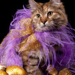 Christmas cat — Stock Photo #12155368
