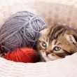 Cute kitten and knitting ravels — Stok fotoğraf
