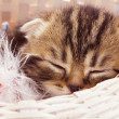 Stock Photo: Sleeping kitten