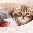 Cute kitten in a basket - Stock fotografie