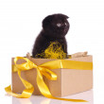 Funny black kitten in a box set — Stock Photo #13426839
