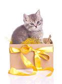 Funny furry gray kitten in a box set — Stock Photo