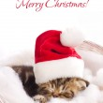 Beautiful kitten in santa claus cap — Stock Photo #13614030