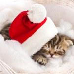 Cat sleeping on christmas — Stock Photo #14775863