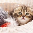 Cute kitten in basket — Photo #15354263
