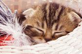 спит котенок — Стоковое фото