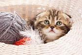 Roztomilý kotě v košíku — Stock fotografie